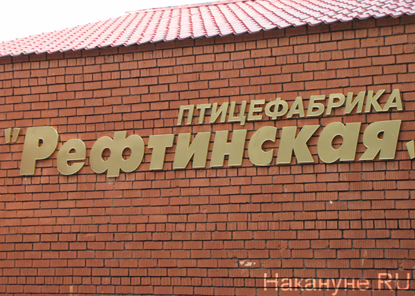 птицефабрика Рефтинская(2012)|Фото: Накануне.RU