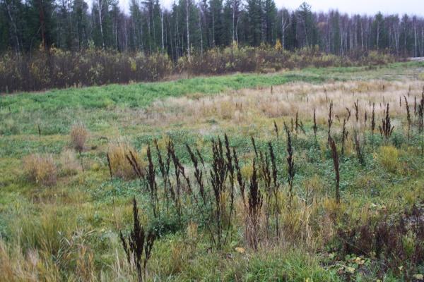 тнк-вр, рекультивация земель, трава, лес|Фото: тнк-вр
