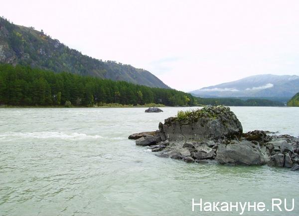Алтай, река, Катунь, природа, горы, лес|Фото: Накануне.RU