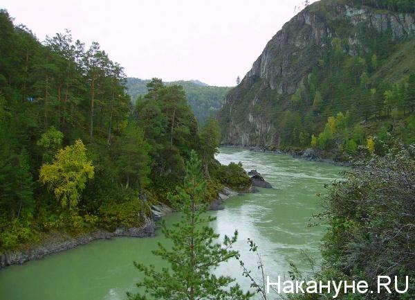 Алтай, река, Катунь, природа, горы, лес(2014)|Фото: Накануне.RU