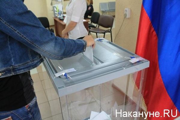 коиб, выборы, урна, бюллетень|Фото: Накануне.RU