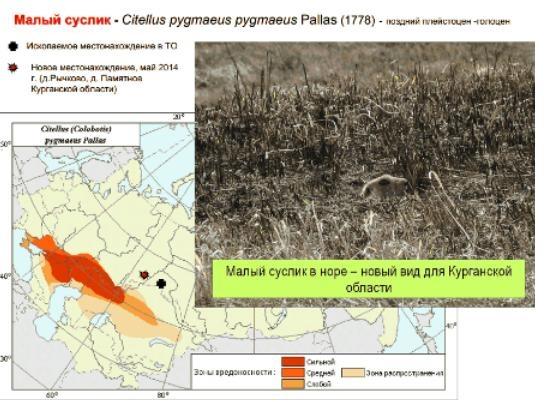 малый суслик инфографика|Фото: utmn.ru