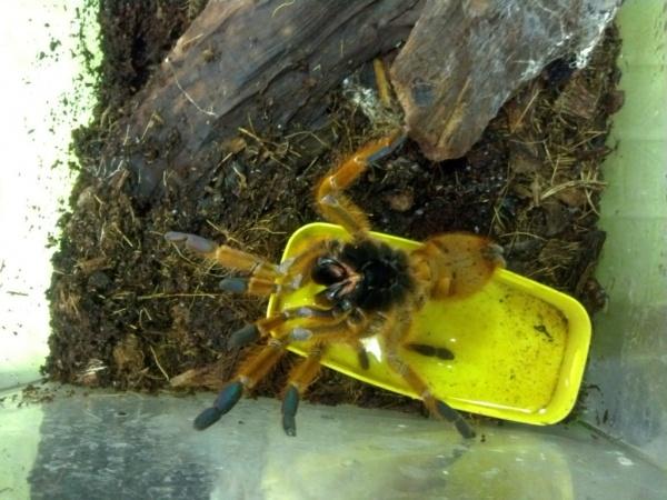 скорпион, потомство, животные, зоопарк|Фото: Екатеринбургский зоопарк