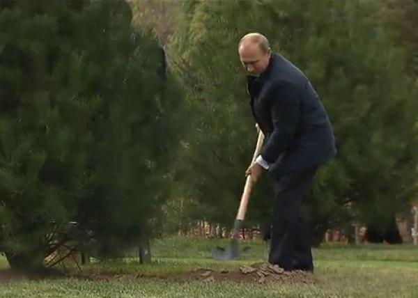 путин, атэс, дерево Фото: