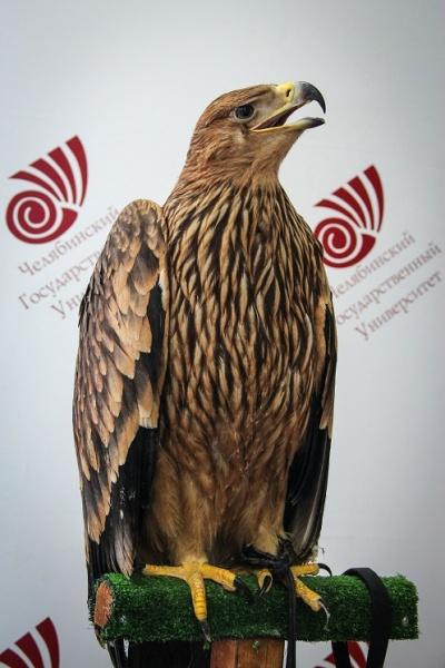 орел-могильник переименование|Фото:пресс-служба челгу