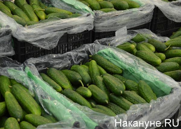 продукты, магазины, цены, огурцы|Фото: Накануне.RU