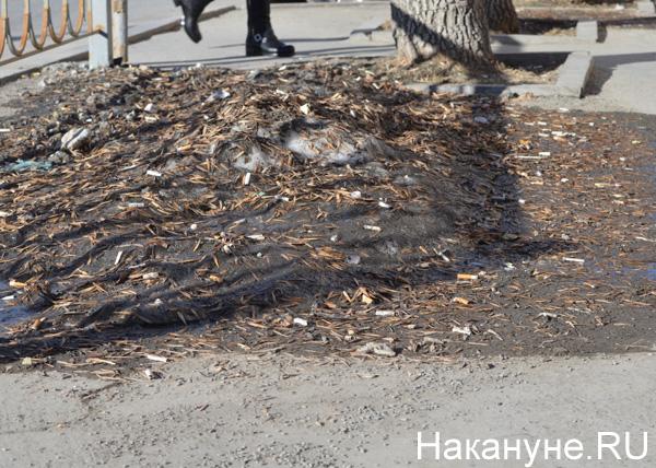 Екатеринбург, улицы, грязь, окурки|Фото: Накануне.RU