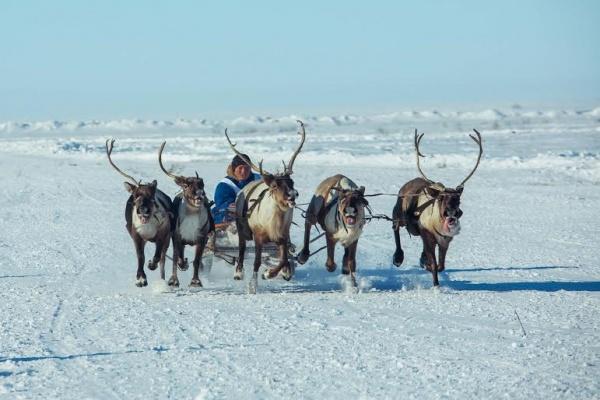 слет оленеводов и охотников|Фото: газпром нефть