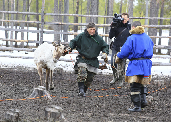 NF1, Югра, Когалым, олени, кмнс|Фото: admhmao.ru