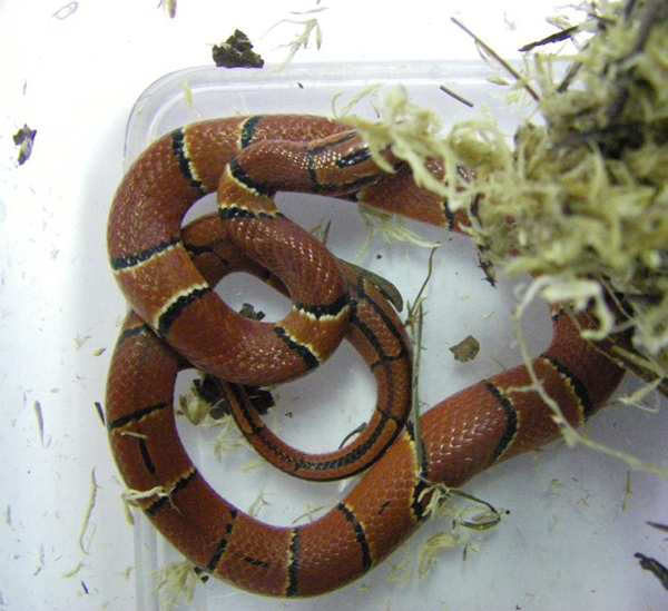 змеи, зоопарк|Фото: Екатеринбургский зоопарк