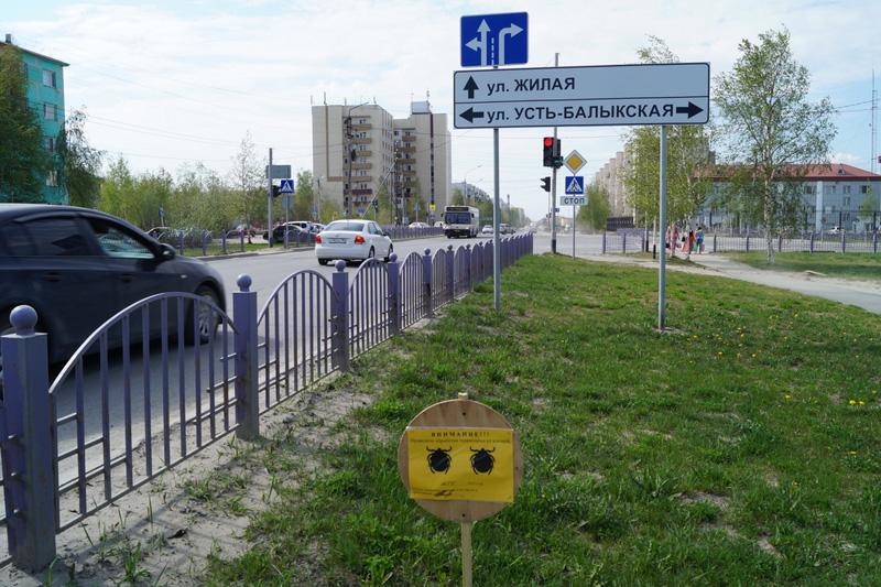 Клещи в Нефтеюганске|Фото: Накануне.RU