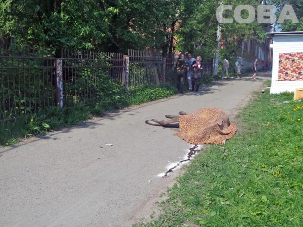 "лось, животное, труп|Фото: Служба спасения ""СОВА"""