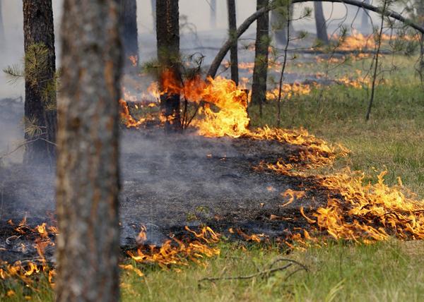 лесной пожар, Колорадо|Фото: mirvkartinkah.ru