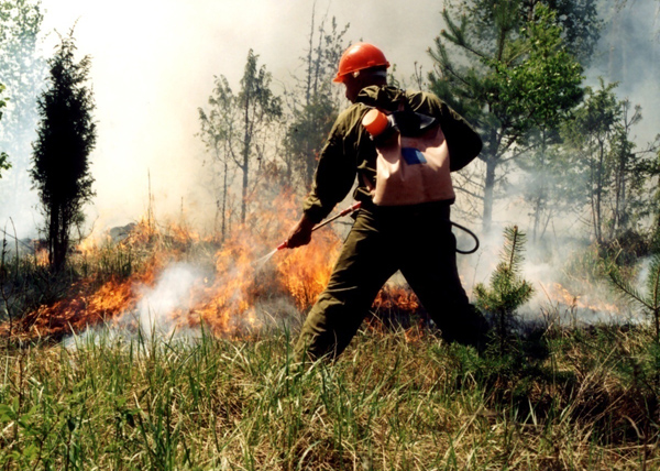 лесной пожар, заповедник Ямала|Фото: pravdaurfo.ru