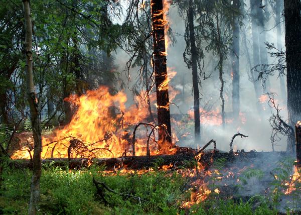 лесной пожар, Калужская область|Фото: imenno.ru