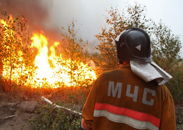 лесной пожар, МЧС|Фото: fedpress.ru