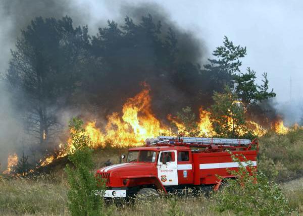 лесной пожар близ г. Нововоронежа|Фото: REUTERS/Sergei Karpukhin