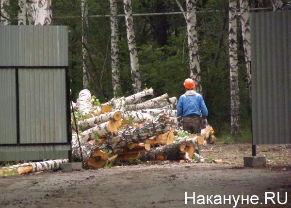 Парк Коммунаров, вырубка деревьев, Вечный огонь|Фото: Накануне.RU
