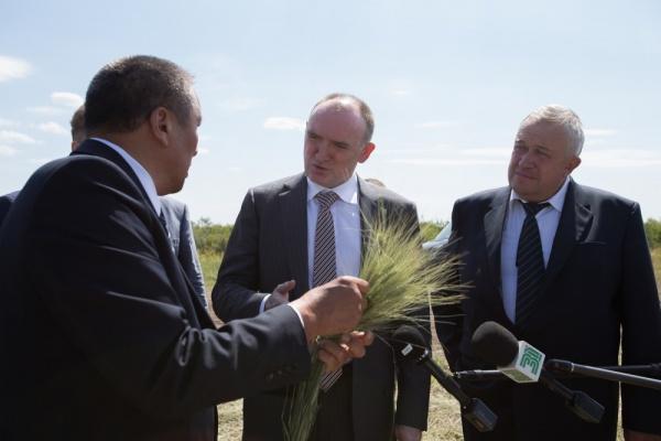 поле пшеница Борис Дубровский|Фото: gubernator74.ru