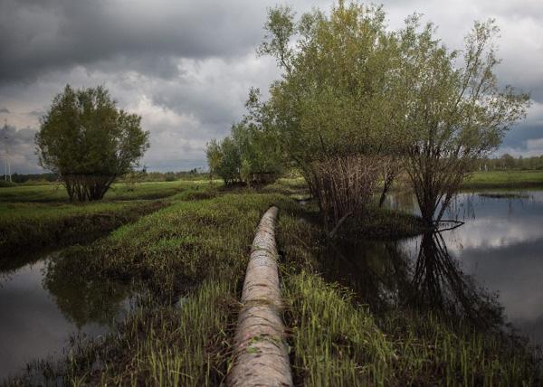 экспедиция Гринписа в Нефтеюганск|Фото: greenpeace.org