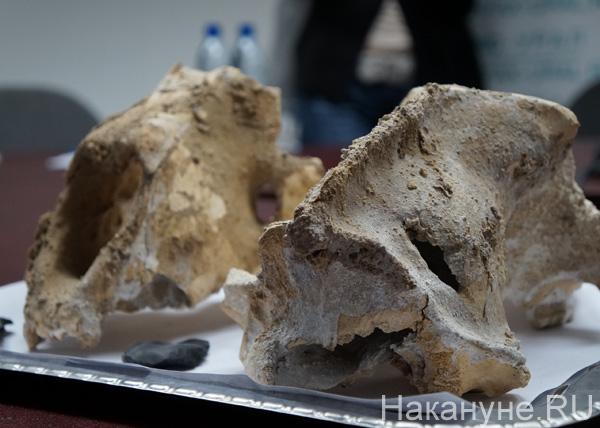 Палеонтологические находки Уро РАН|Фото: Накануне.RU