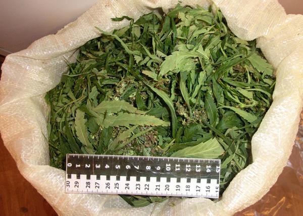 марихуана, конопля, наркотики, борьба с наркотиками Фото: ГИОС Управления ФСКН России по Свердловской области