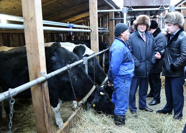 Алексей Кокорин, семейные животноводческие фермы в Половинском районе|Фото: kurganobl.ru