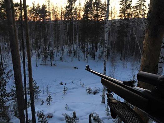 Виктор Шептий, винтовка Фото: Виктор Шептий