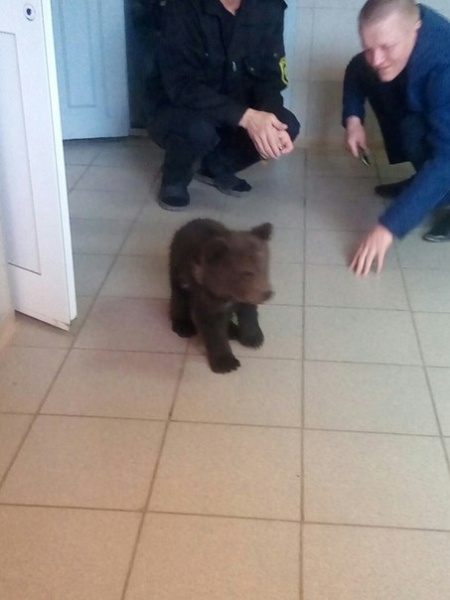 медвежонок|Фото:https://vk.com/te_ekb