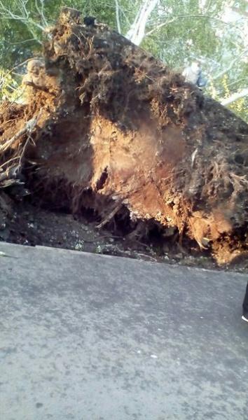 ураган в Екатеринбурге, дерево|Фото:https://vk.com/te_ekb