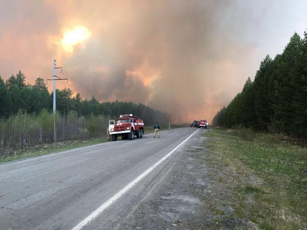лесной пожар в Тавде|Фото: ГУ МВД России по СО