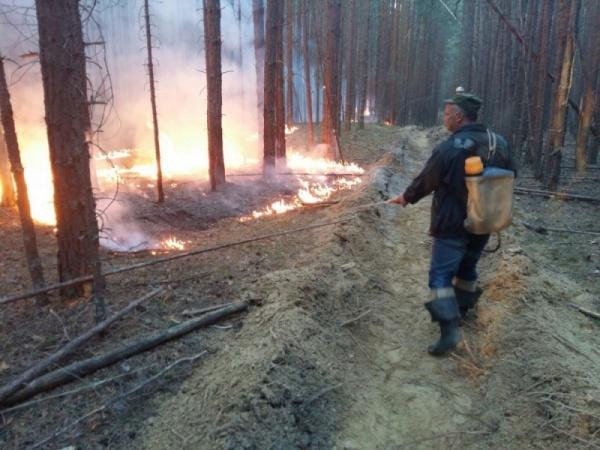 пожар, лесной пожар, огонь, пожарные|Фото: ГУ  МЧС по СО