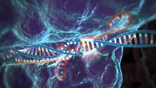 CRISPR/Cas9|Фото: livetv.city